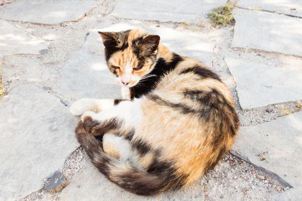 Les chats de Mykonos