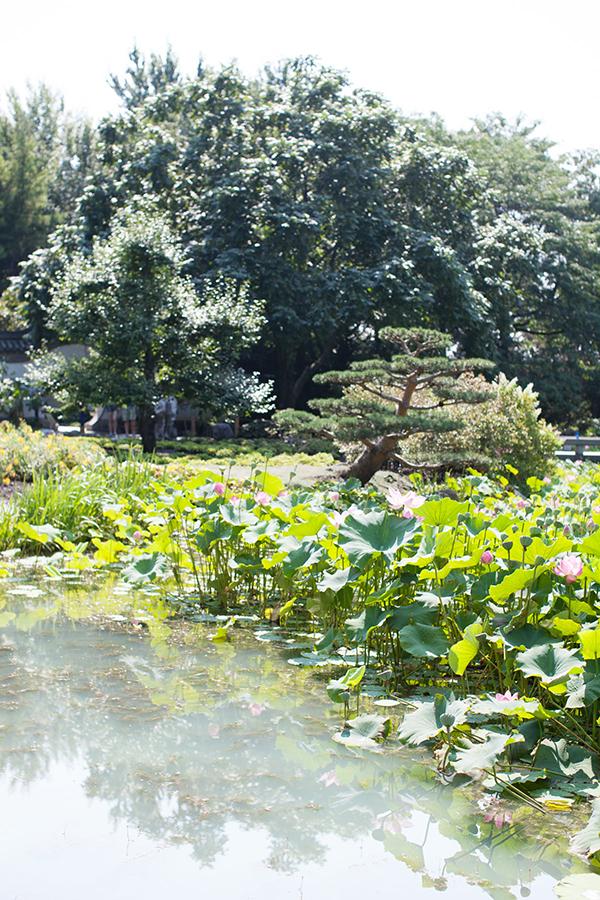 Jardin Chinois Montréal