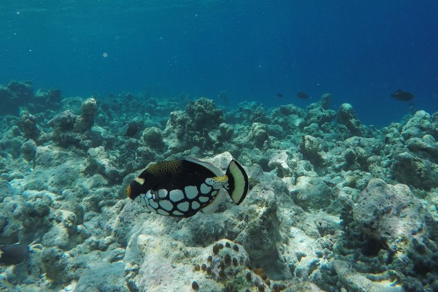 Snorkling safari Kuramathi Maldives