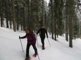 Nous parcourons les forêts de spruce (épicéa) de la Poldjuka !...
