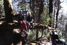 pause rigolade au milieu des grands arbres...