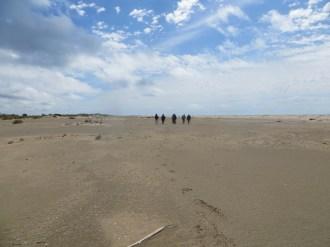 Marche Nordique en Camargue, plages désertes