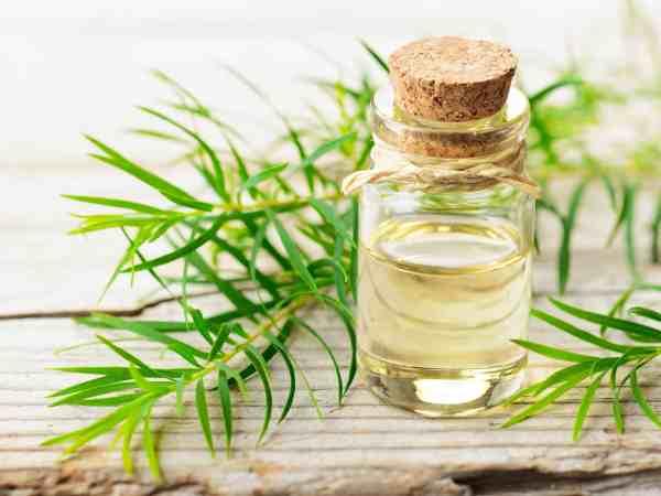 Imagem de um frasco com óleo de melaleuca.