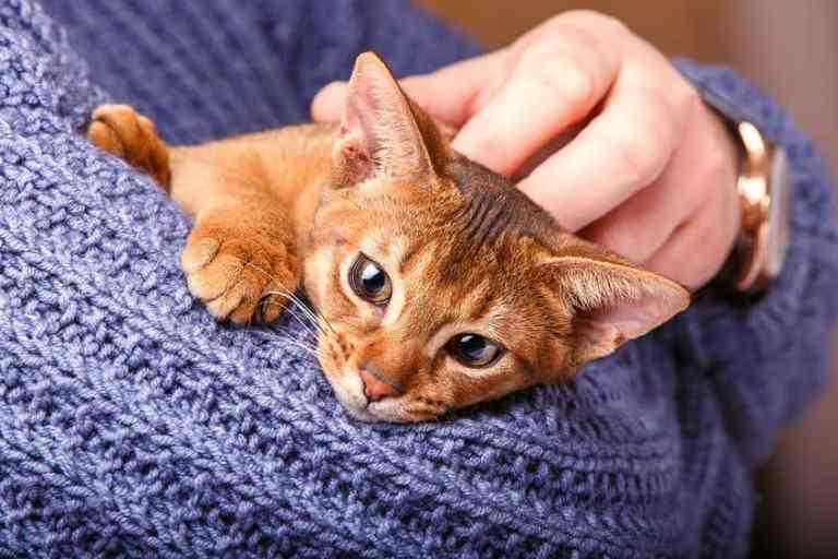 cuccia-per-gatti-cuccioli-xcyp1