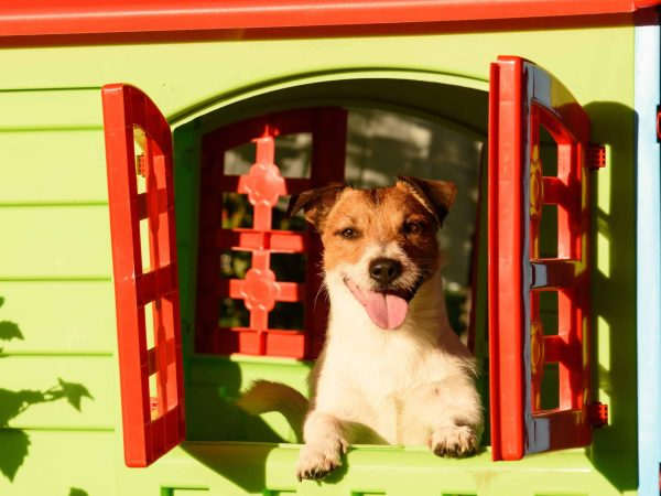 Pet sitting inside colorful kennel