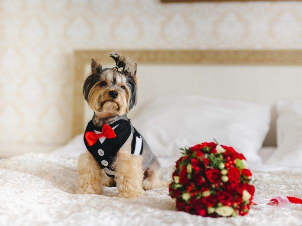 Cane vestito sul letto