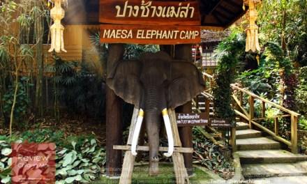 เกาะกระแสวันช้างไทย ที่ปางช้างแม่สา