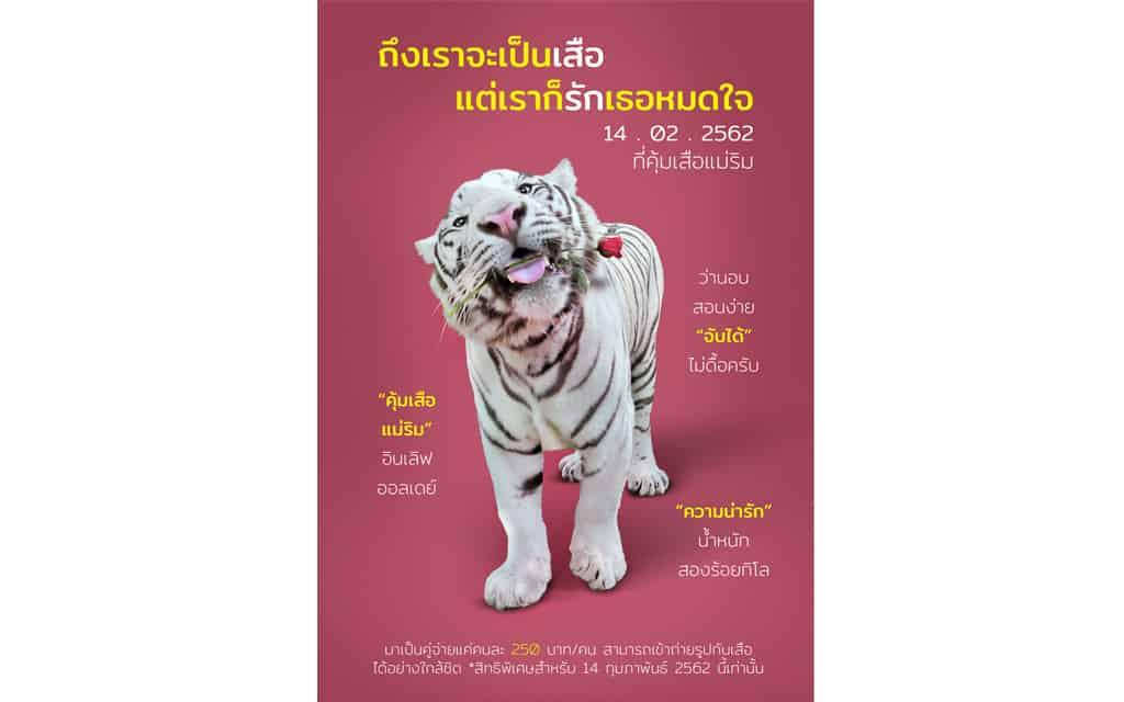 คุ้มเสือแม่ริม จังหวัดเชียงใหม่ ชวนมาแฮปปี้อินเลิฟในวันวาเลนไทน์แบบสุดพิเศษที่คุ้มเสือแม่ริม
