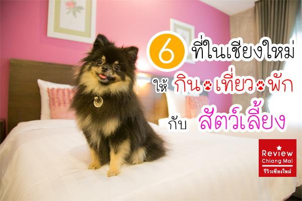 6 ที่ในเชียงใหม่ ให้กิน เที่ยว พัก กับสัตว์เลี้ยง