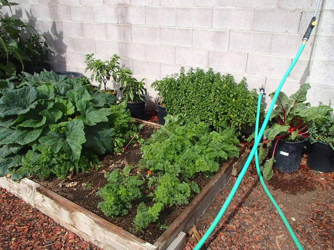 Planting Calendar Will Help When Growing Vegetables Las Vegas Review Journal