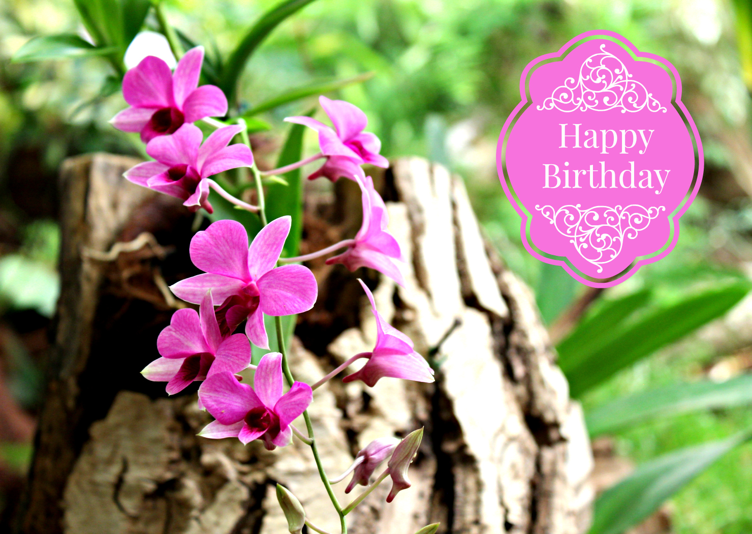 Wenskaart Happy Birthday Orchidee