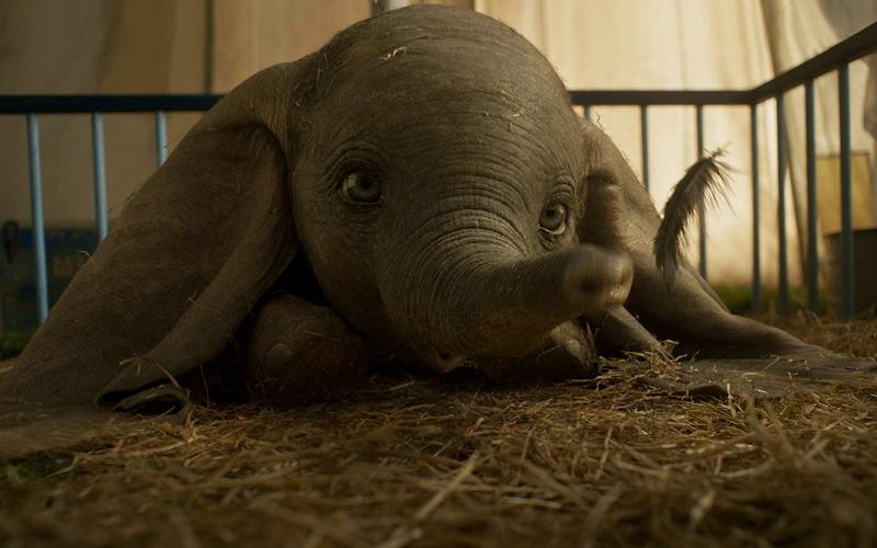 Dumbo still