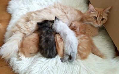 Wij krijgen kittens + een geschiedenis over de katten in ons leven