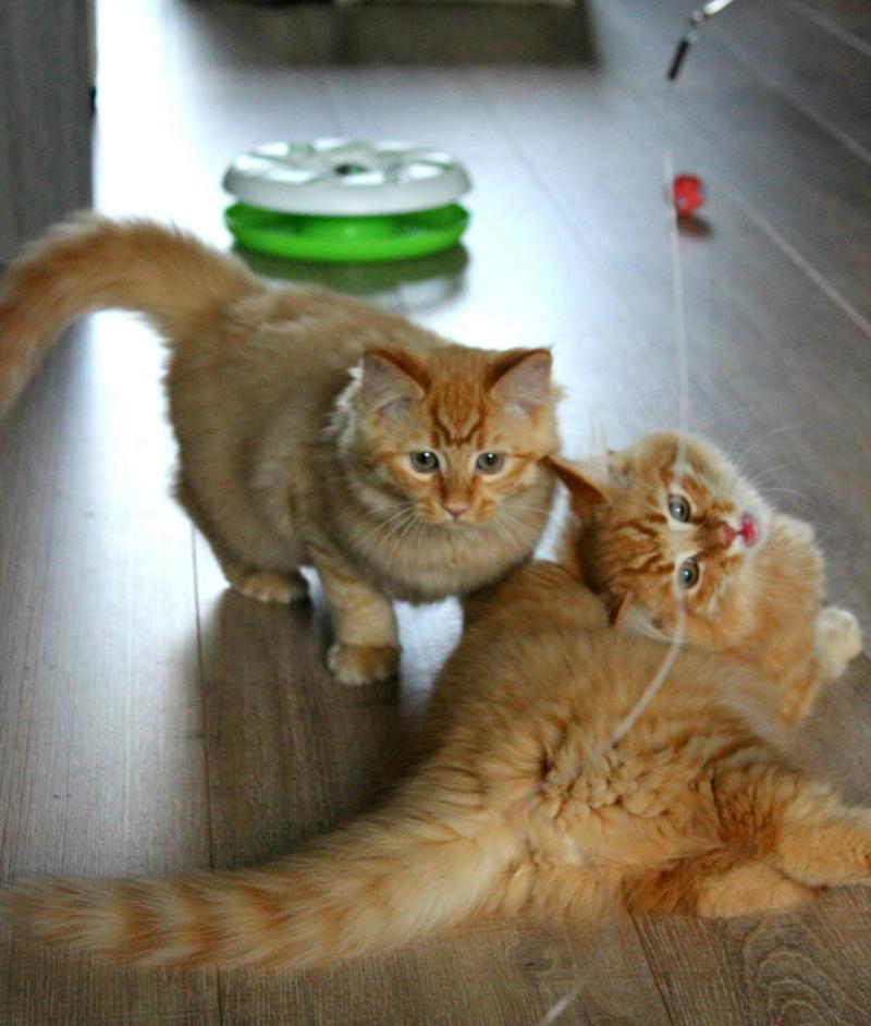 Fred en George