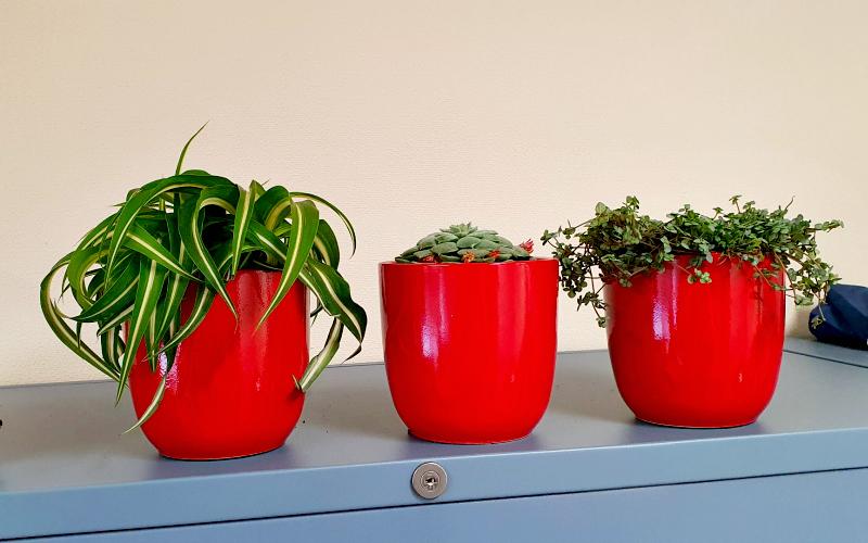 Nieuwe plantjes op kantoor