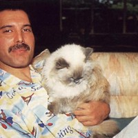 Freddie Mercury and a Cat