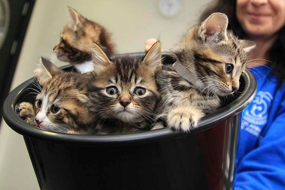 Kittens are presented in a bucket to Britain's Camilla, Duchess of Cornwall, during her visit to open the new cattery at the 150 year old Battersea Dogs and Cats Home in London October 27, 2010. REUTERS/Chris Jackson/pool (BRITAIN - Tags: ANIMALS SOCIETY ROYALS)