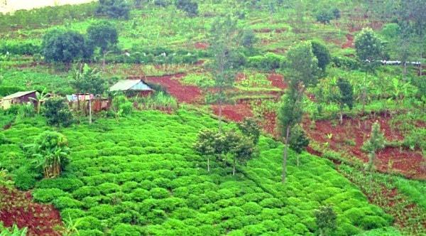 Fertile volcanic soil Kenya. Image credit tishaferral.com