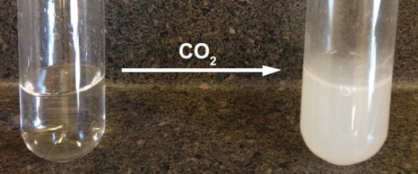 Lime water turns milky indicating the presence of carbon dioxide. Image credit calpoly.edu