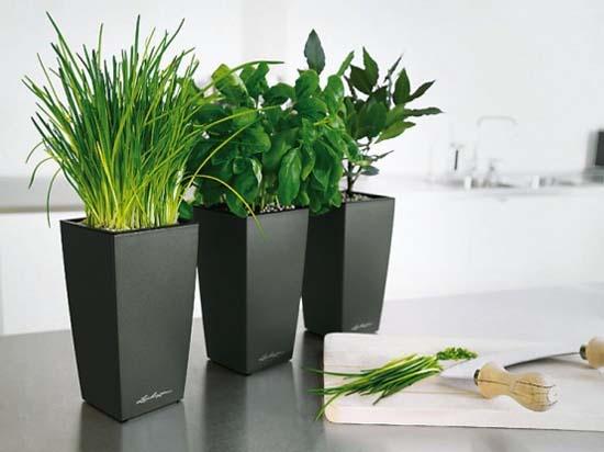 Potted plants. Image credit nubolo.net