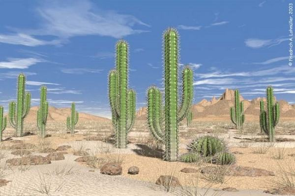 Cacti plants have adapted to desert conditions. Image credit f-lohmueller.de