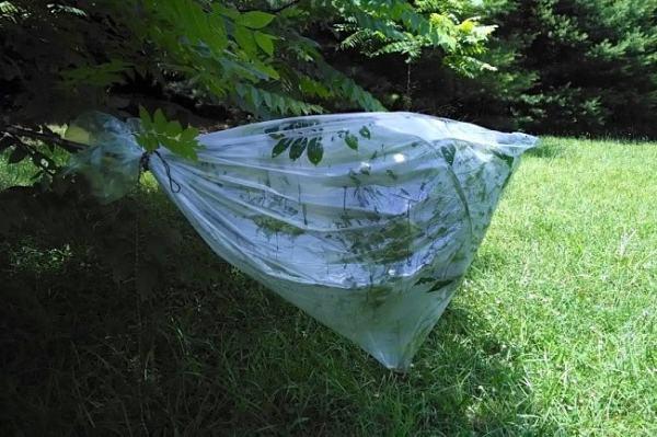 Demostrating transpiration. Image credit masterwoodsman.com