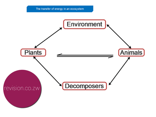 Energy transfer in an ecosystem