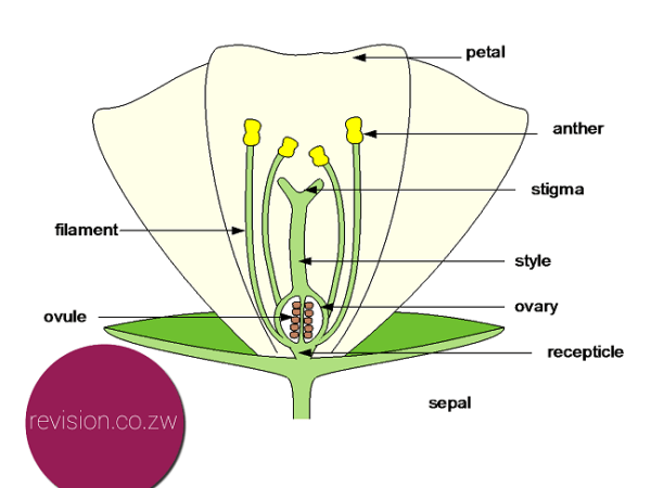 The basic structure of a flower