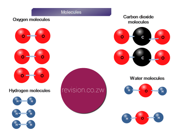 Molecules of carbon, oxygen, hydrogen and water