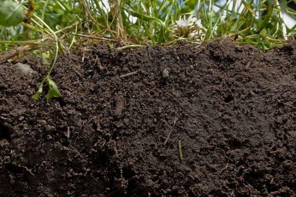 Loam soil. Image credit betterground.org