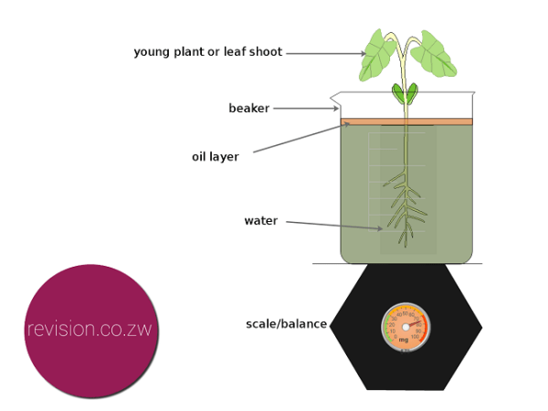 investigating water loss in plants