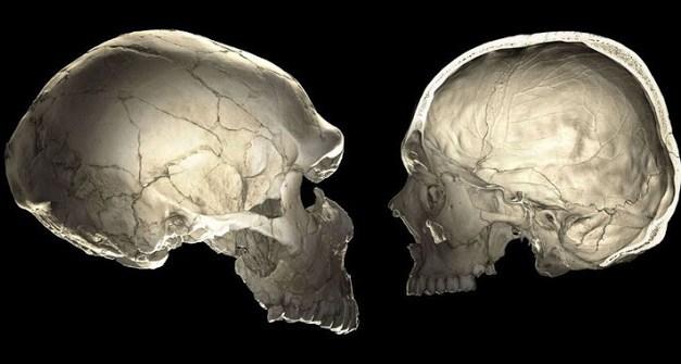 Los genes neandertales influyen en la forma de nuestros cráneos