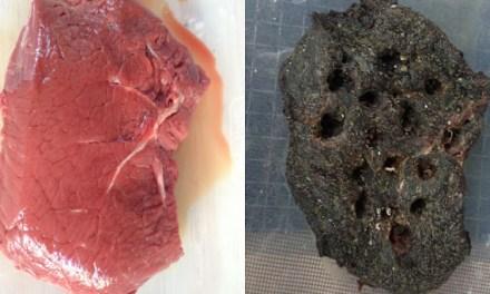 Una investigación analiza la pudrición de la carne para descifrar la dieta neandertal