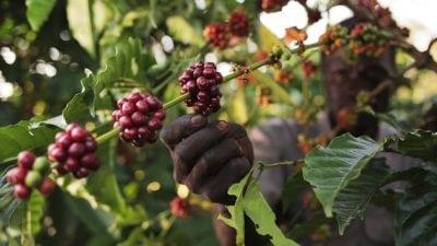 southsudan3_cnespresso_a