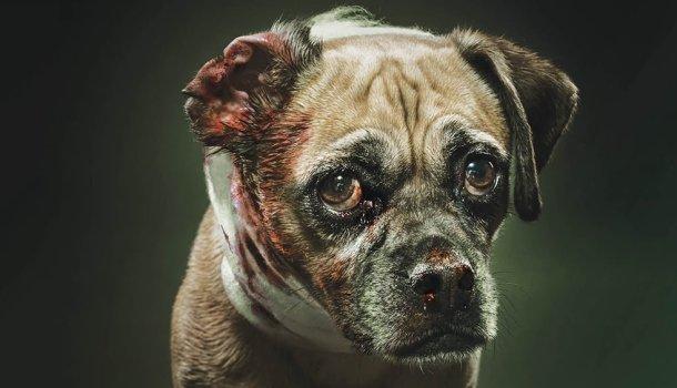 O Agressor De Um Animal Não é Apenas Um Covarde é Também Um