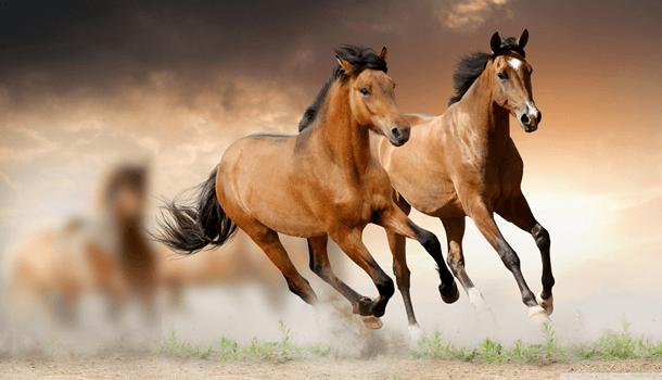O amor segundo os cavalos