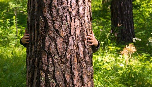 A incrível história do homem que fez amor com uma árvore