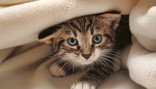 Só Quem Tem Gatos Entende Esse Amor Louco Que Nós Temos Por Eles