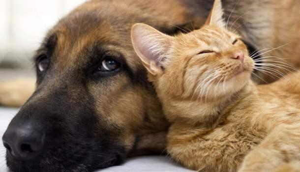 Não compre cães e gatos. Adote!