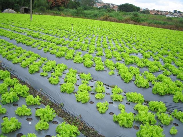 Resultado de imagem para plastico na agricultura