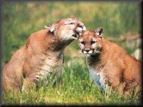 animais da fauna brasileira 5