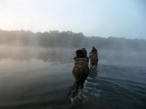 elefantes_Nepal_WT