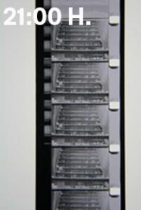 CA2M-1picnic-2