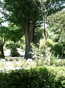 Real Jardín Botánico, Madrid -LOGOPRESS