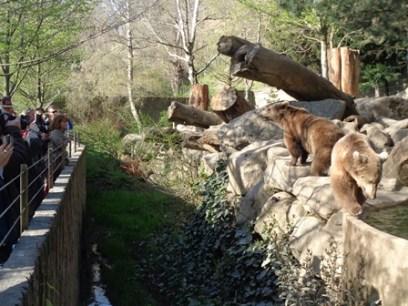 Parc Animalier des Pyrénées 3