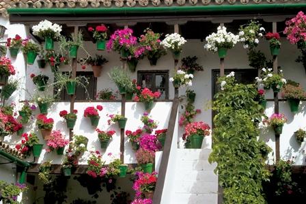 Patios Córdoba (12)