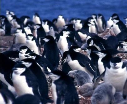 CESIC pingüinos