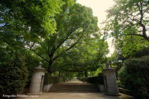 Carlos III Walk - Royal Botanical Garden - MySpanishExperience.com