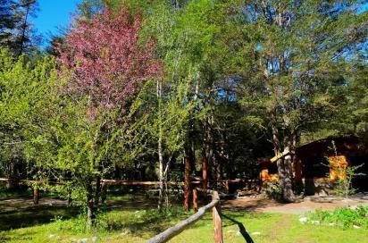 camping_los_alerces_el_bolson_rio_negro_14