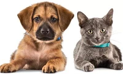Gastos com animais de estimação: qual o limite?
